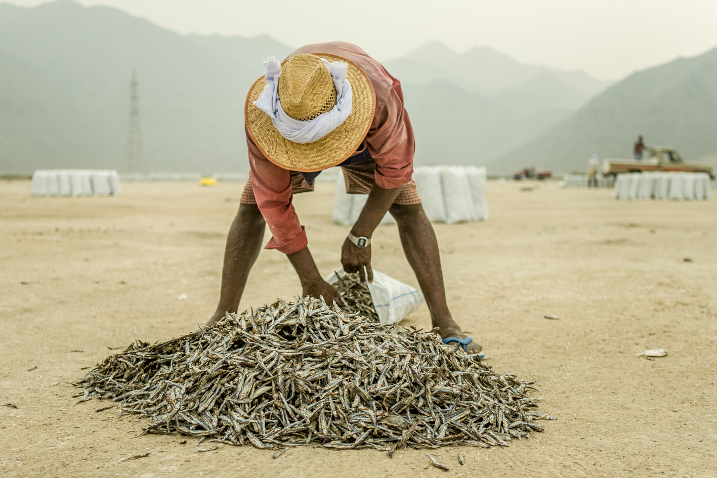 DRIED FISH, DUBAI